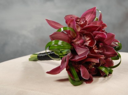 All Cymbidium