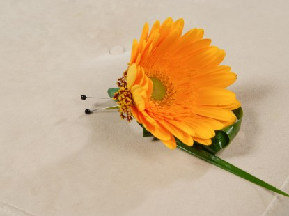 Single Gerbera Daisy