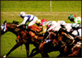 Horse racing and sports booking.
